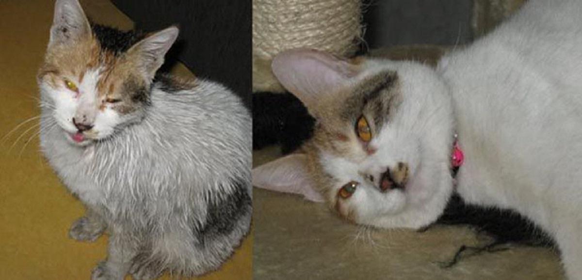gattino con muso malato