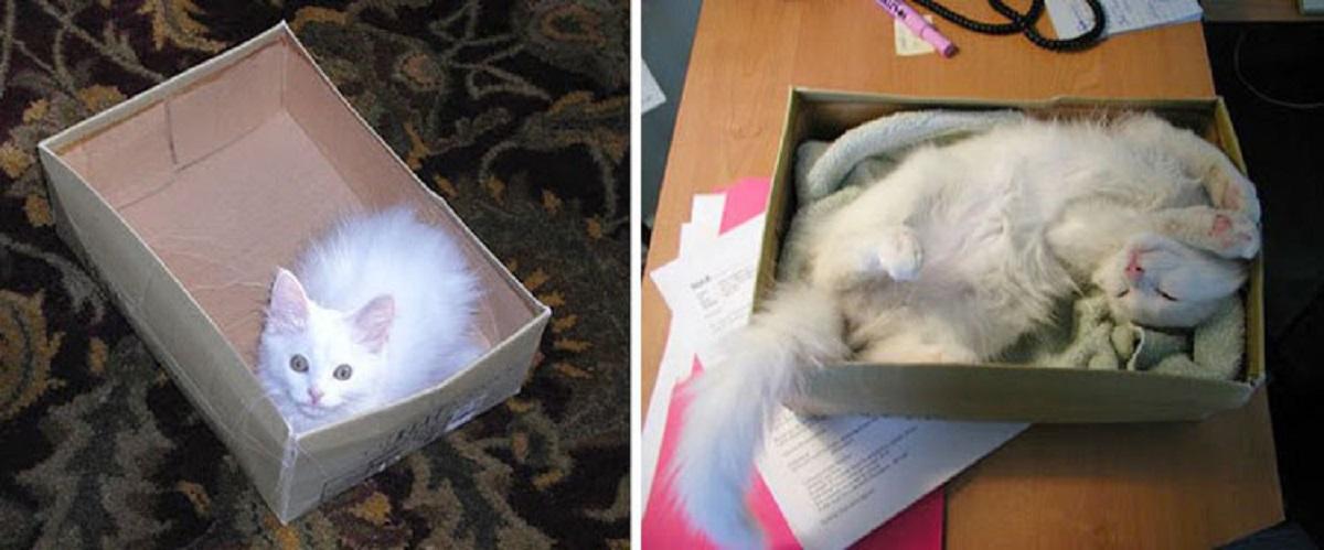 gattino bianco con scatola