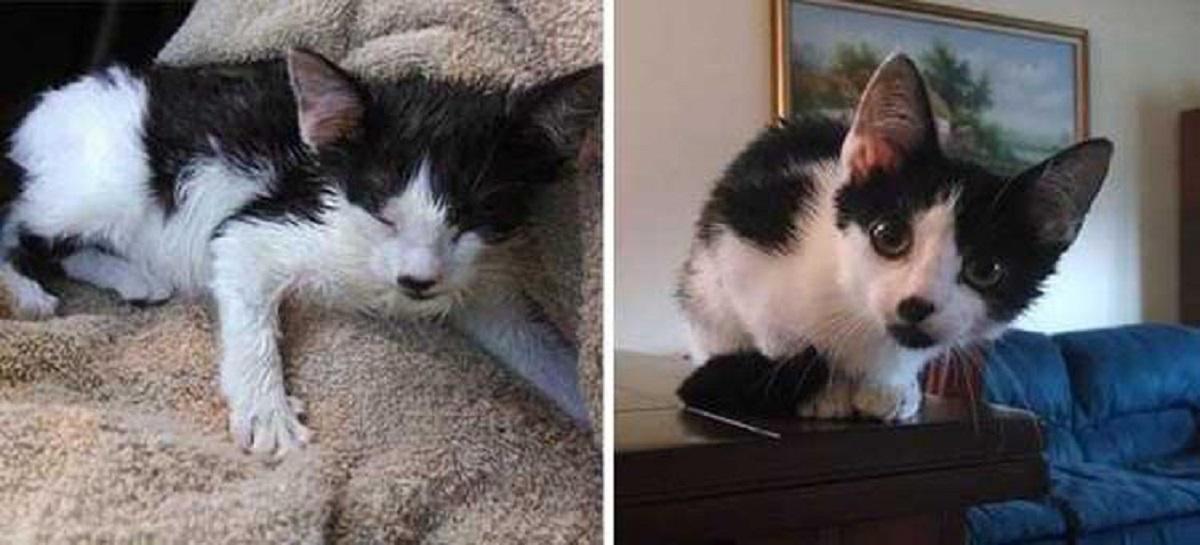 gattino adottato guarda in camera