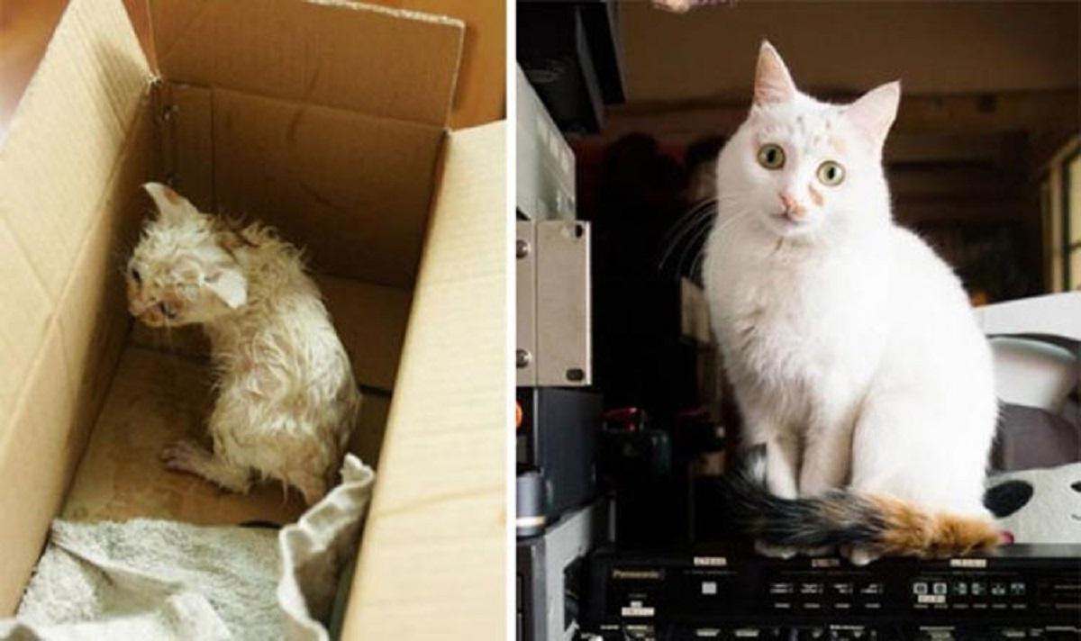 ex gattino abbandonato cresce sano