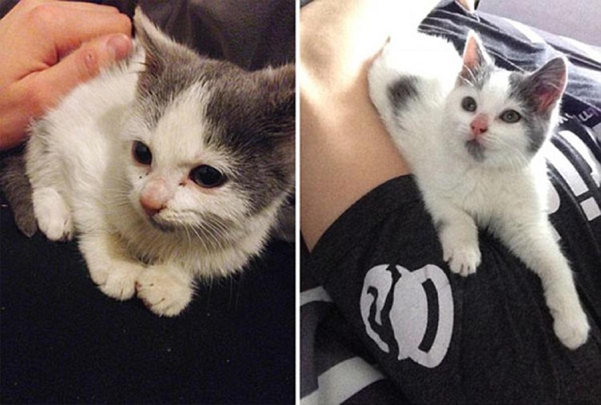 gattino con padrone