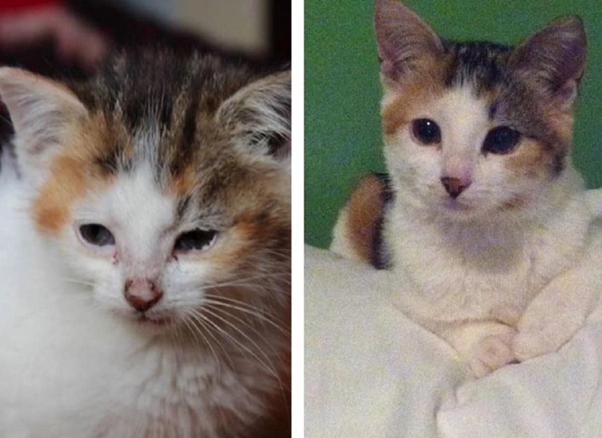 gatto guarito dopo adozione