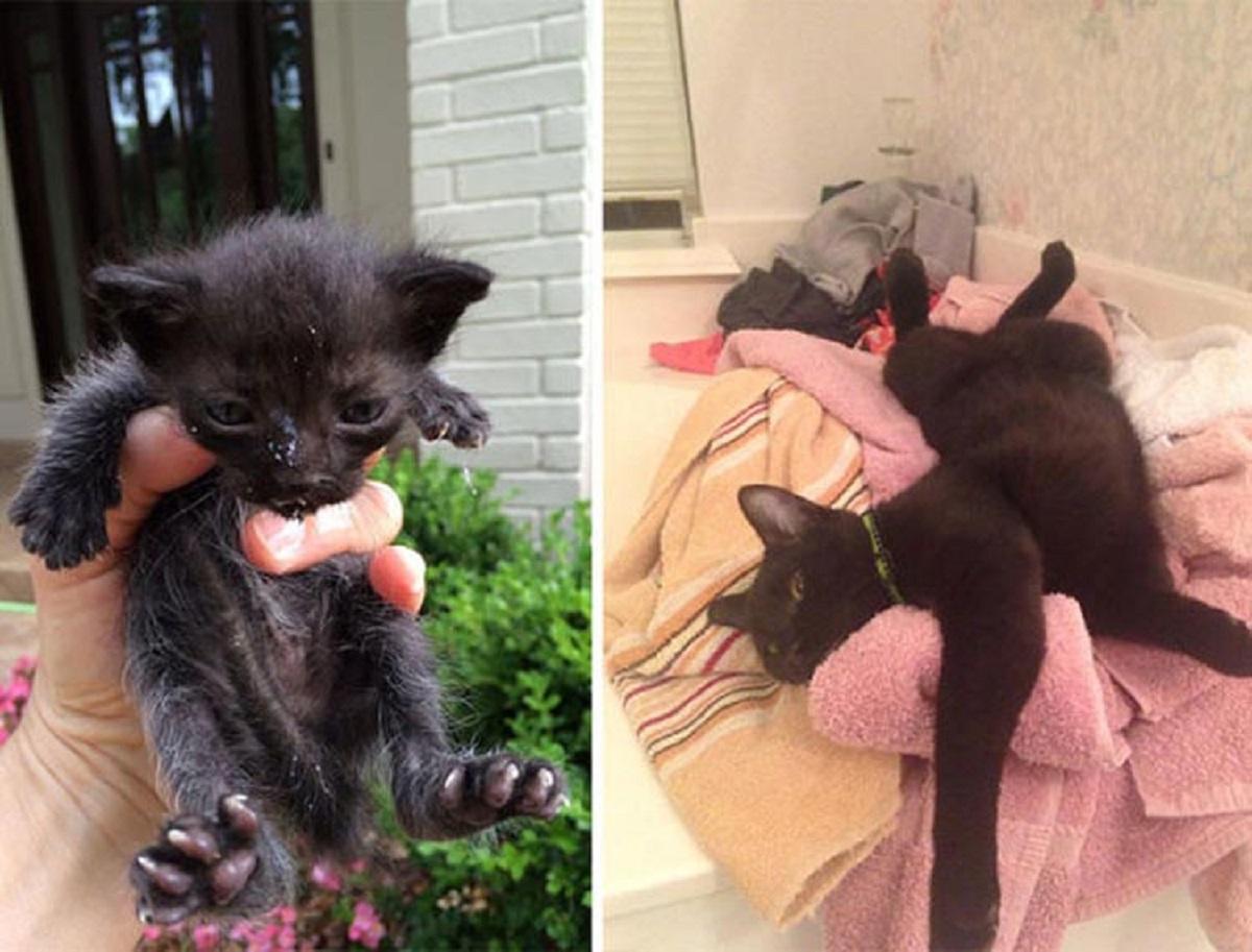 gattino nero adottato