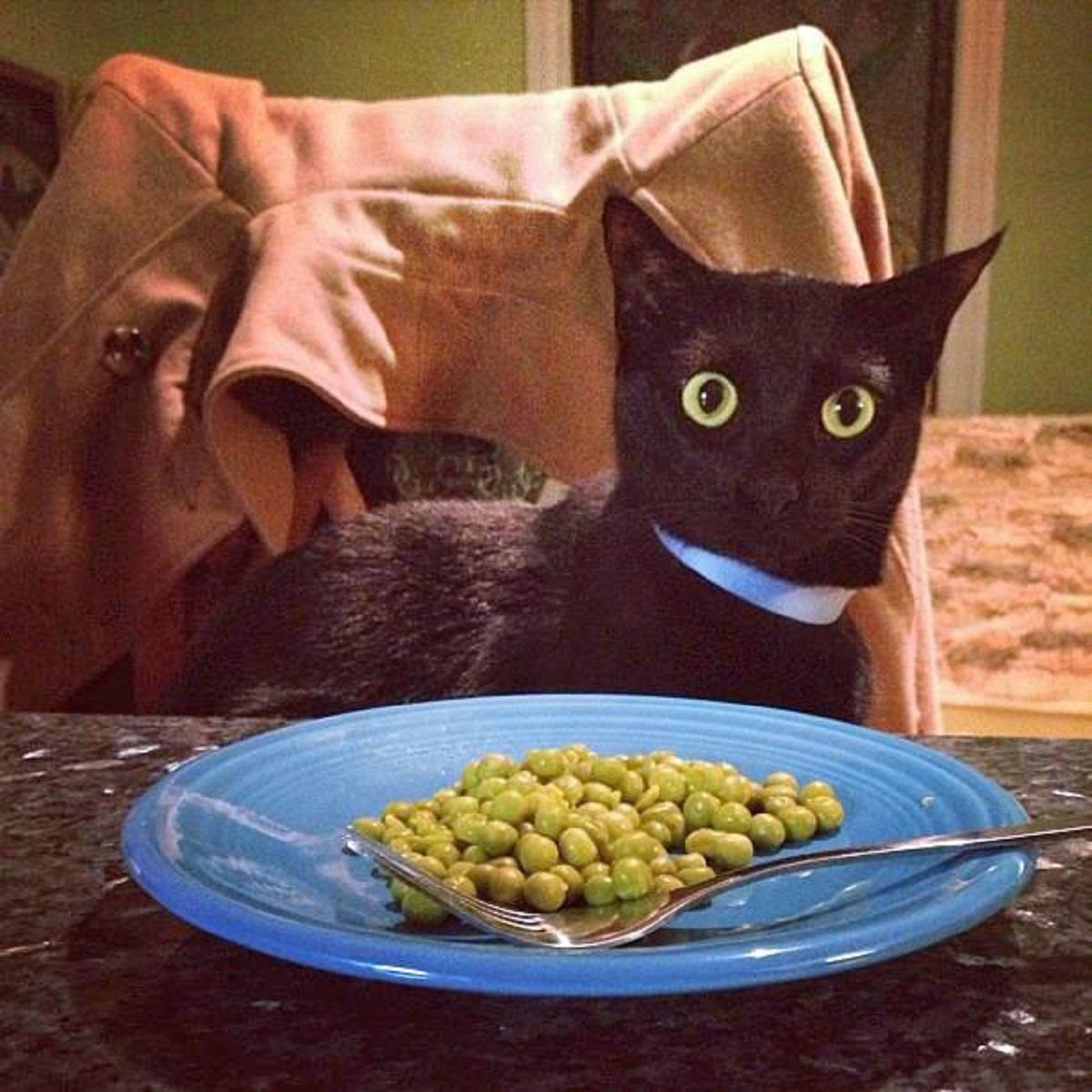 gatto con piatto di piselli