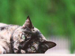 gatto disteso con sfondo verde
