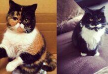 gatti con baffi sul muso