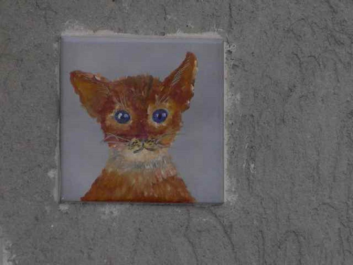 mattonella con gatto per le strade di brolo