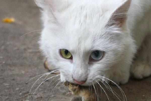 gatto binaco allerta