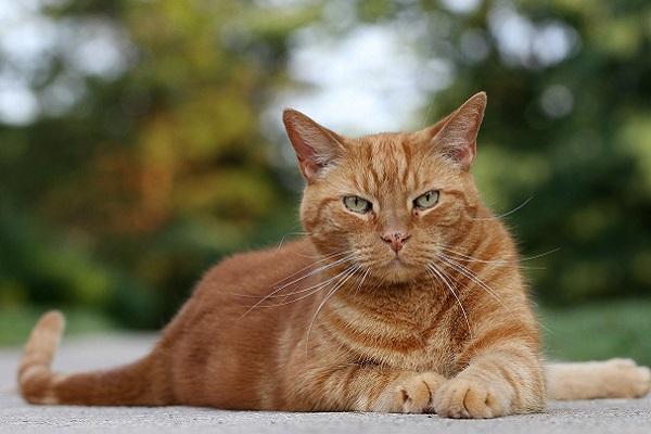 gatto rosso allerta