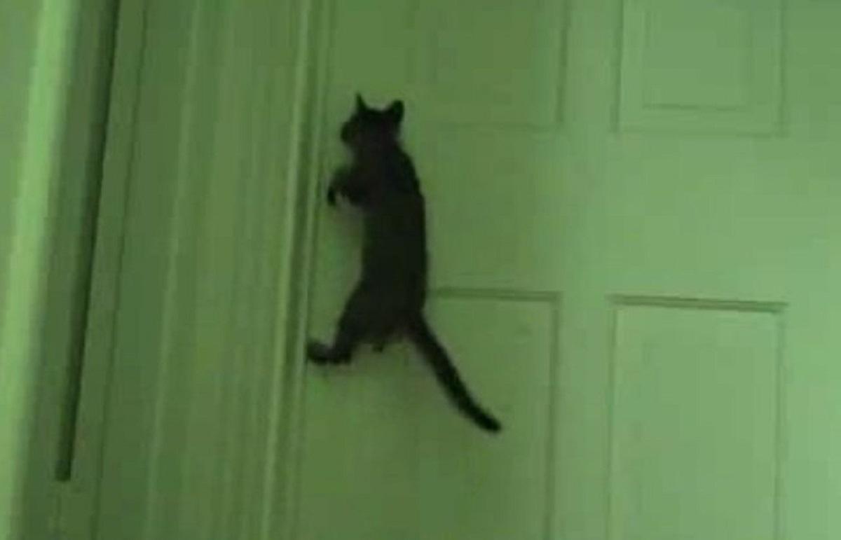 gatto nero arrampicato su porta chiusa