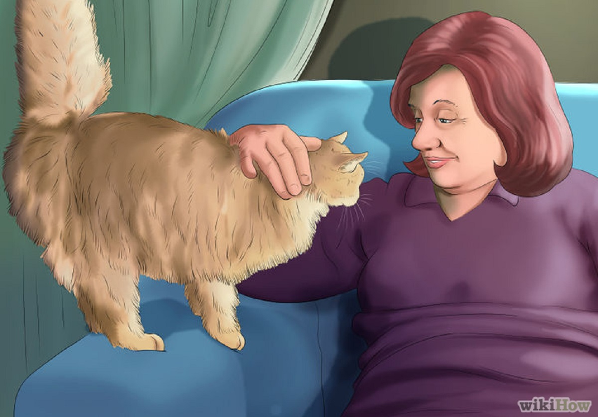 gatto accarezzato e guardato negli occhi