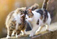 gatti che vanno d'accordo su muretto