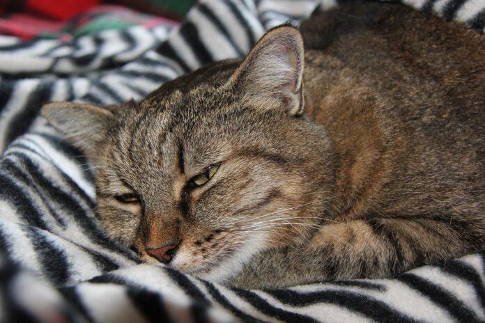 cucce-gatti-riscaldate