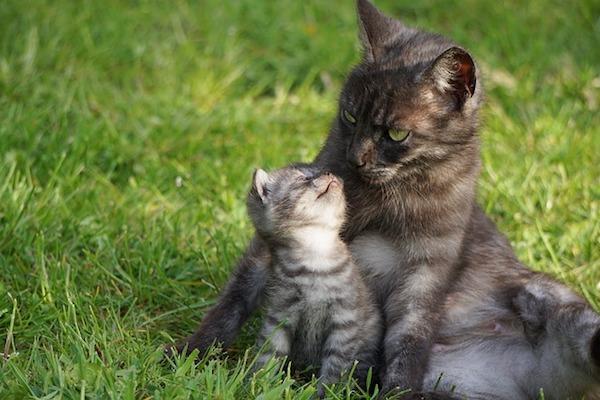 gattino dolce con mamma