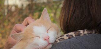 feci -molli - maleodoranti -gatto