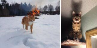 gatti diabolici