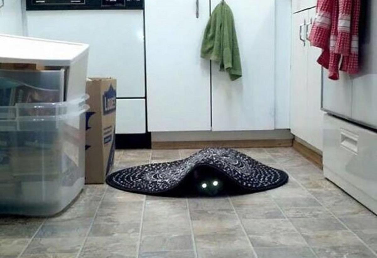 gatto nero sotto tappeto