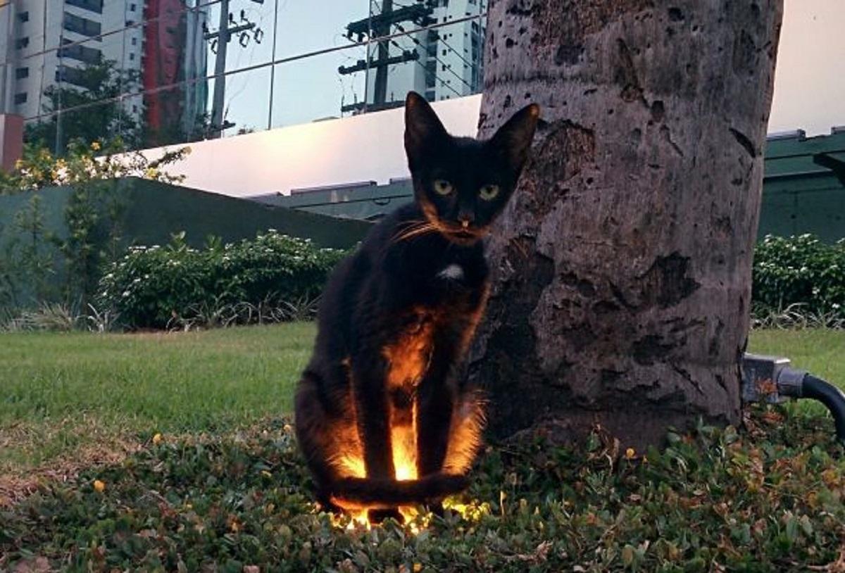 gatto su lampada