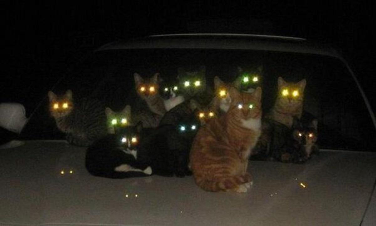 gatti al buio sopra macchina