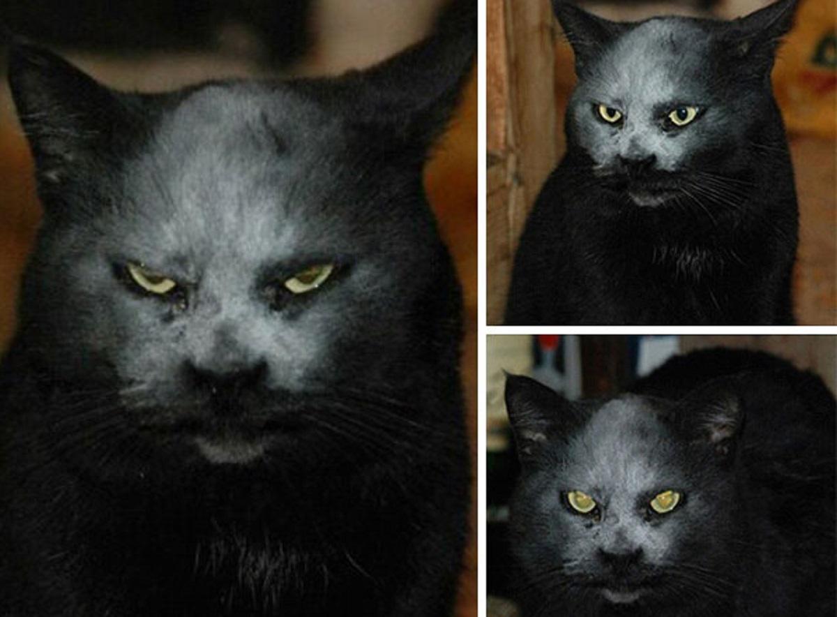 gatto nero coperto di farina