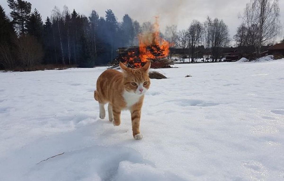 gatto sulla neve davanti a un fuoco