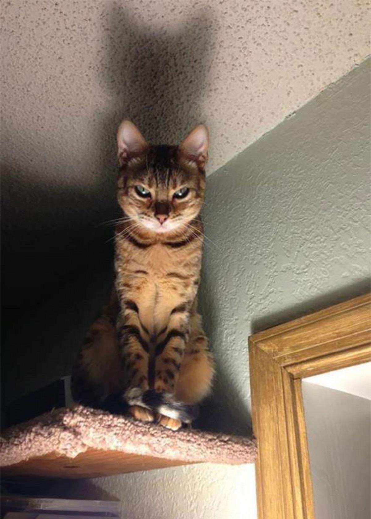 Gatto seduto in penombra