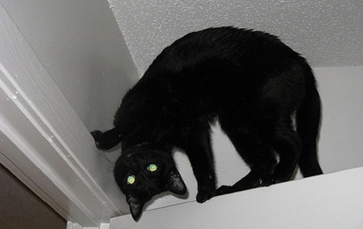 gatto nero su soffitto