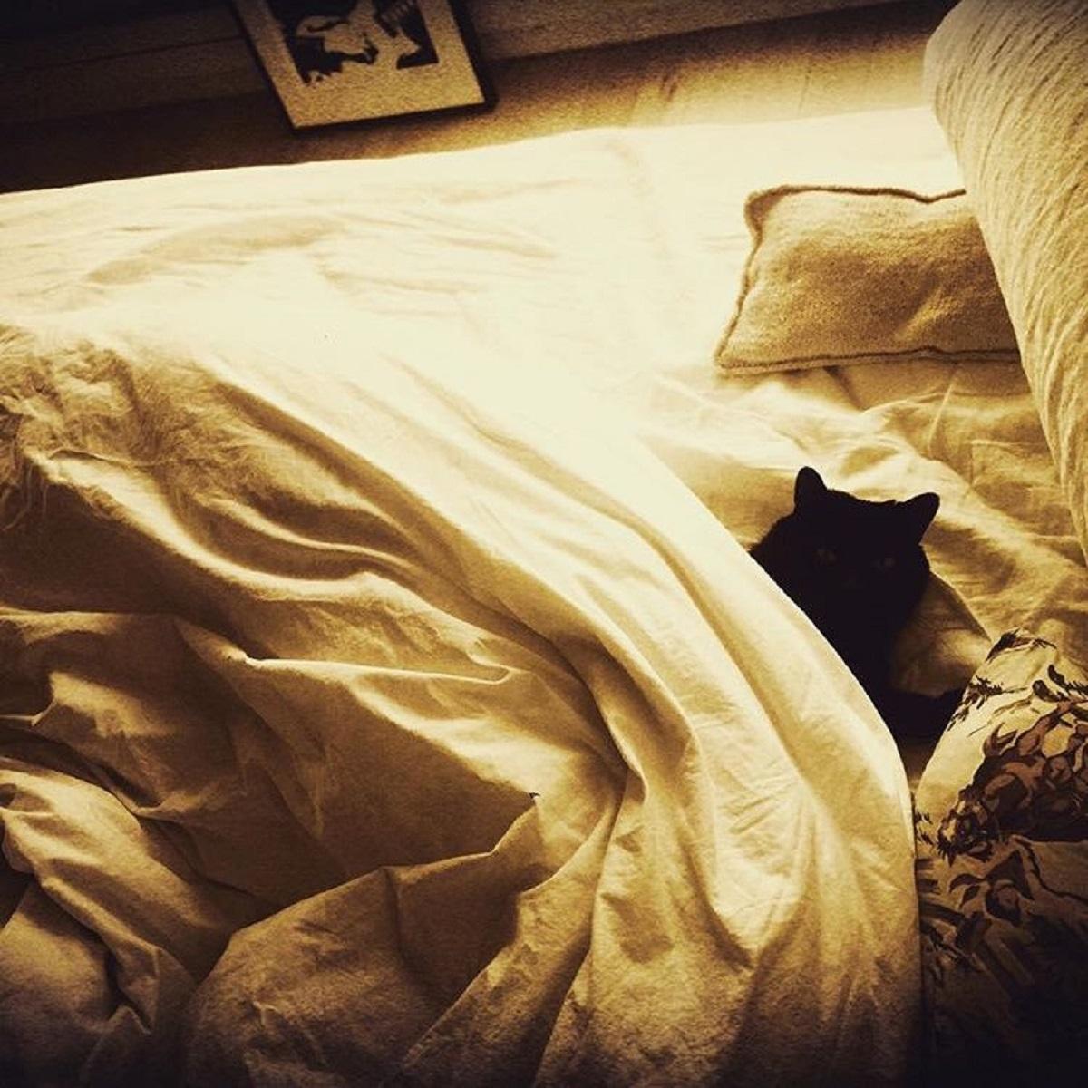 gatto nero sul letto
