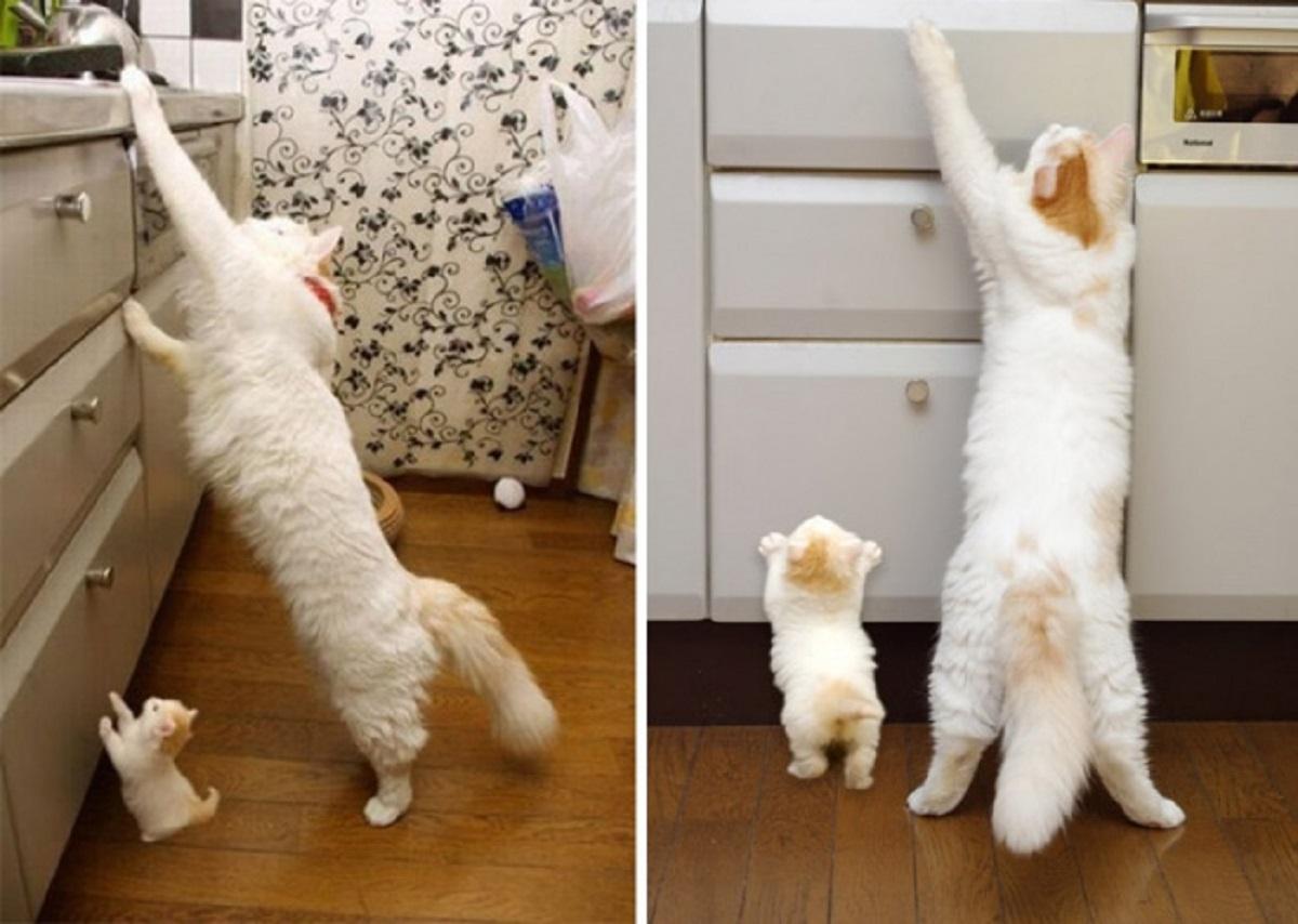 gatta e gattino su cassettiera