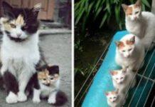 gatti con i loro cuccioli