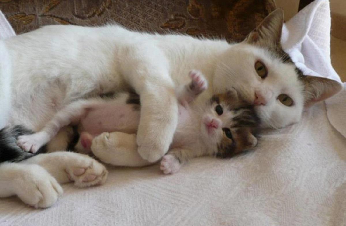 gatta sdraiata con cucciolo