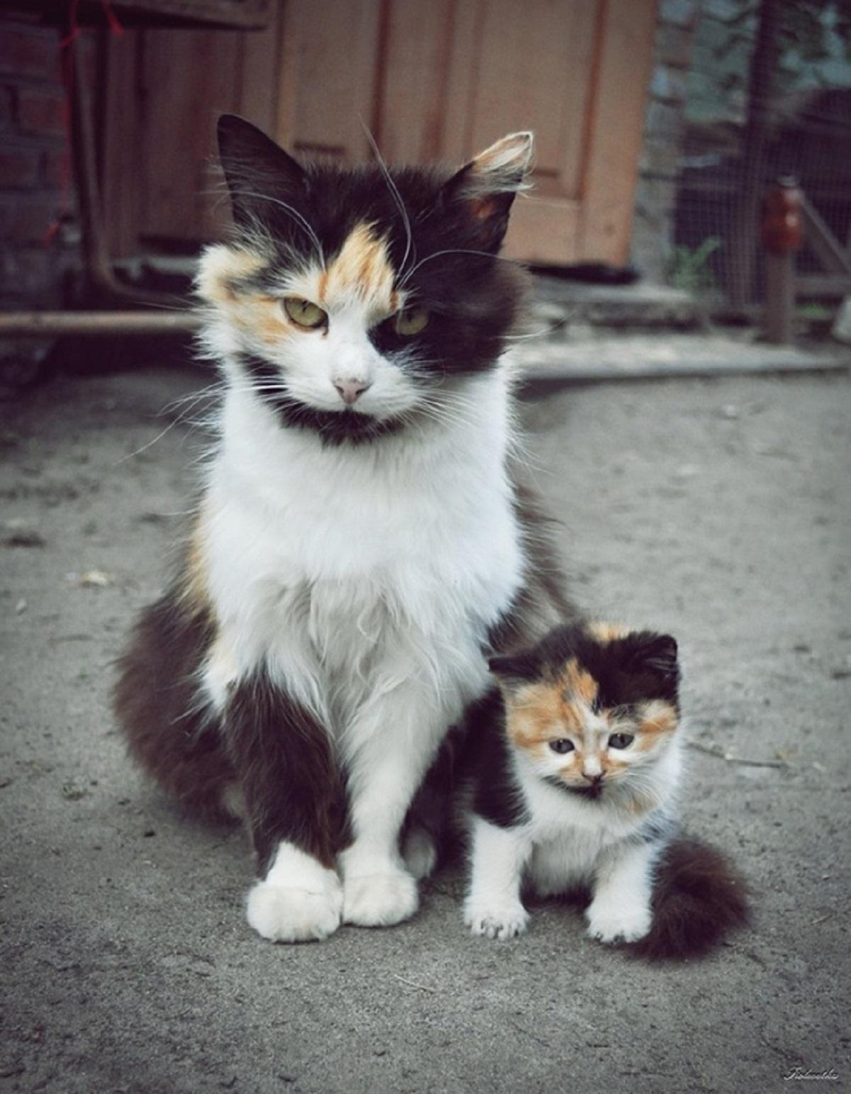 gatto adulto con gattino identico