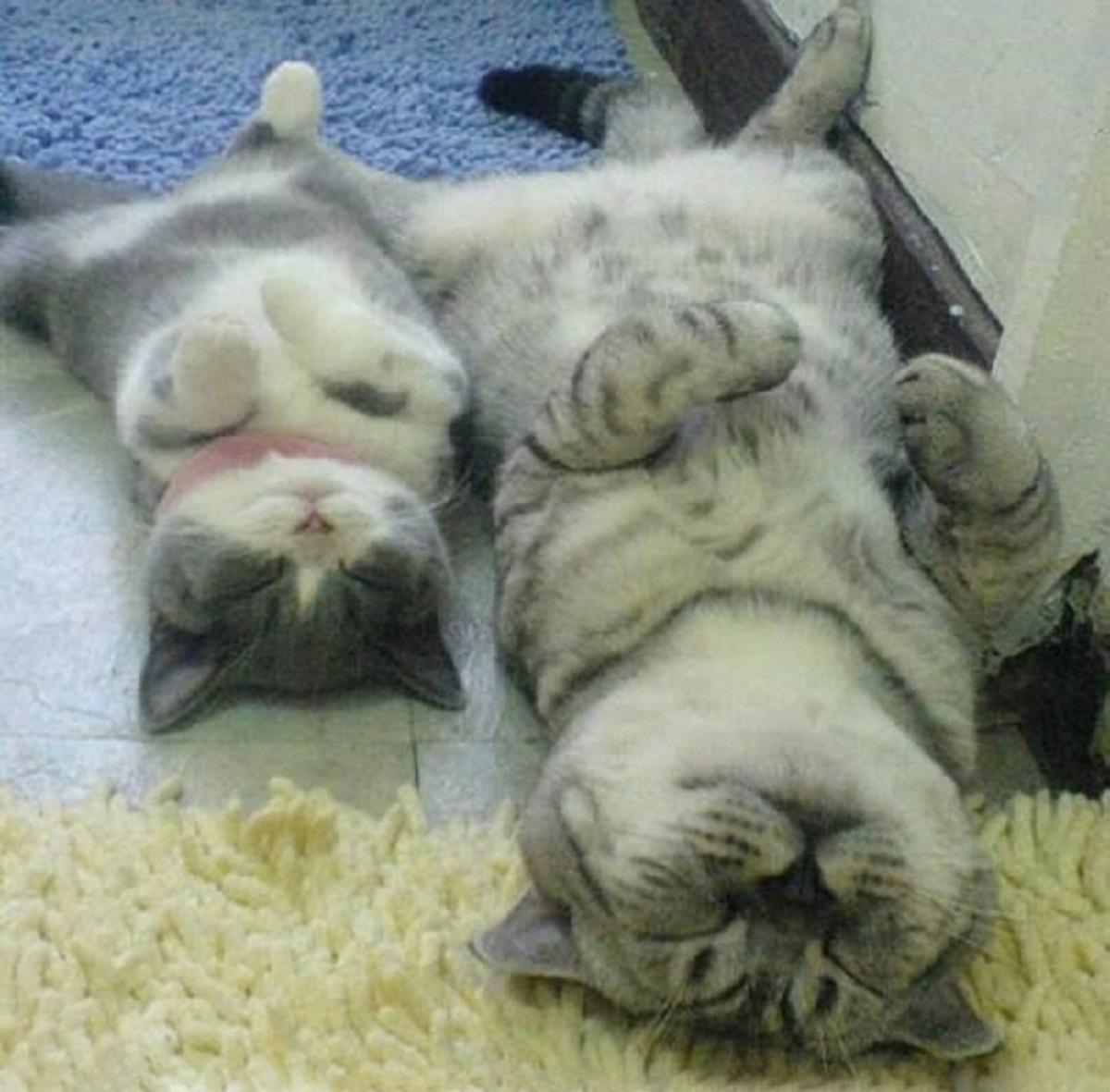 gatto e gattino che dormono