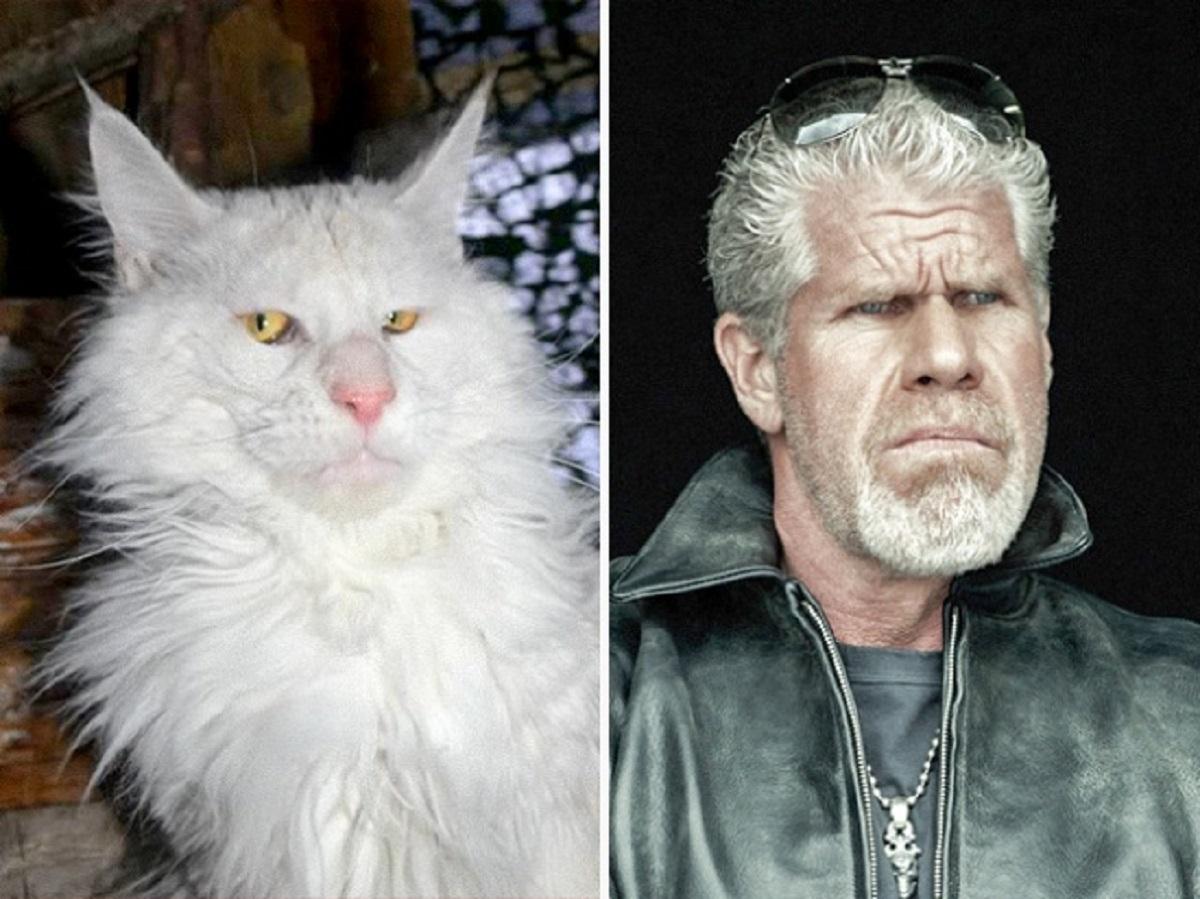 gatto somiglia a ron perlman