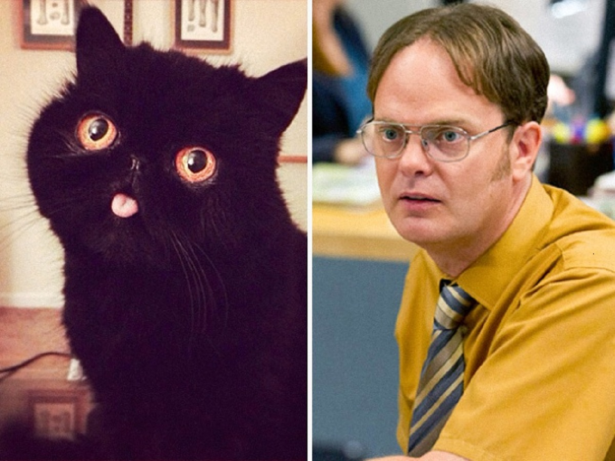 gatto come dwight schrute