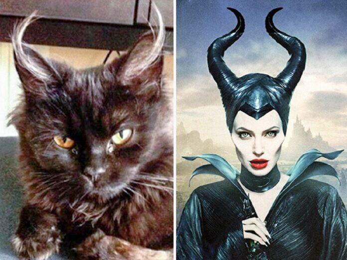 gatto assomiglia a malefica