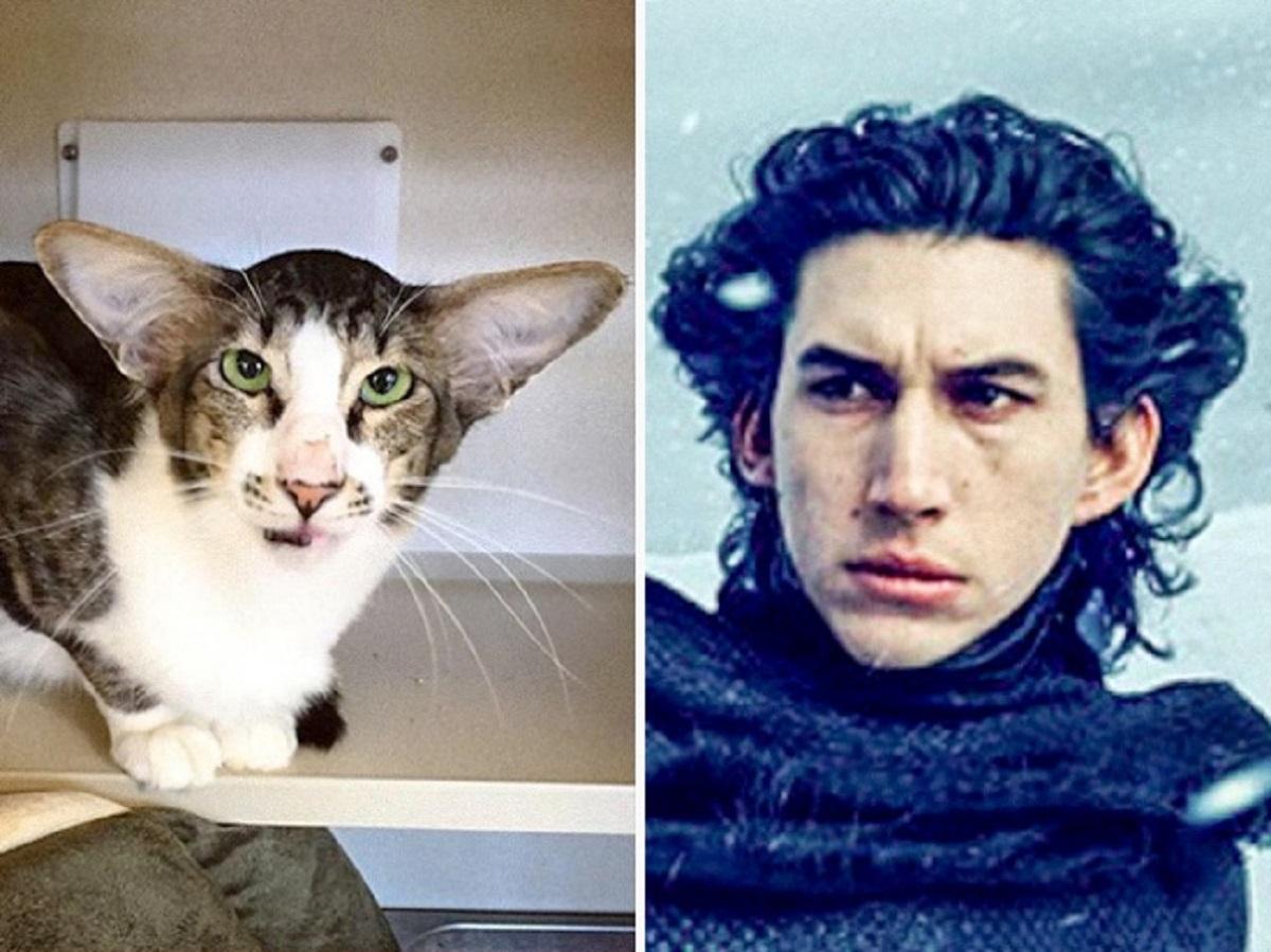 gatto somiglia a kylo ren