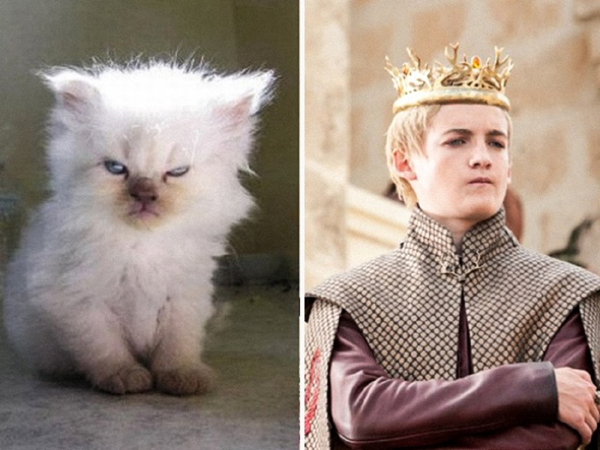 gatto joffrey baratheon