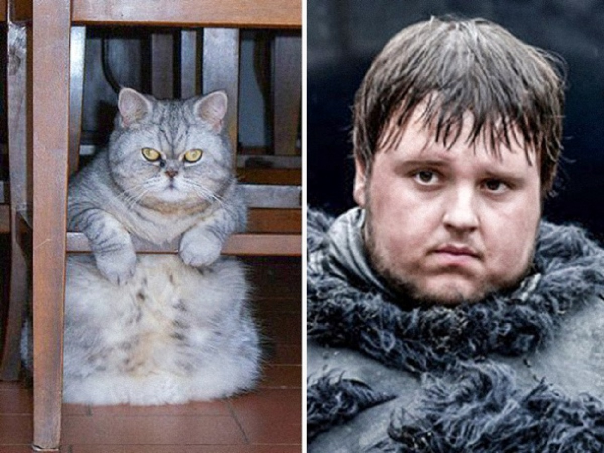 gatto samwell tarly
