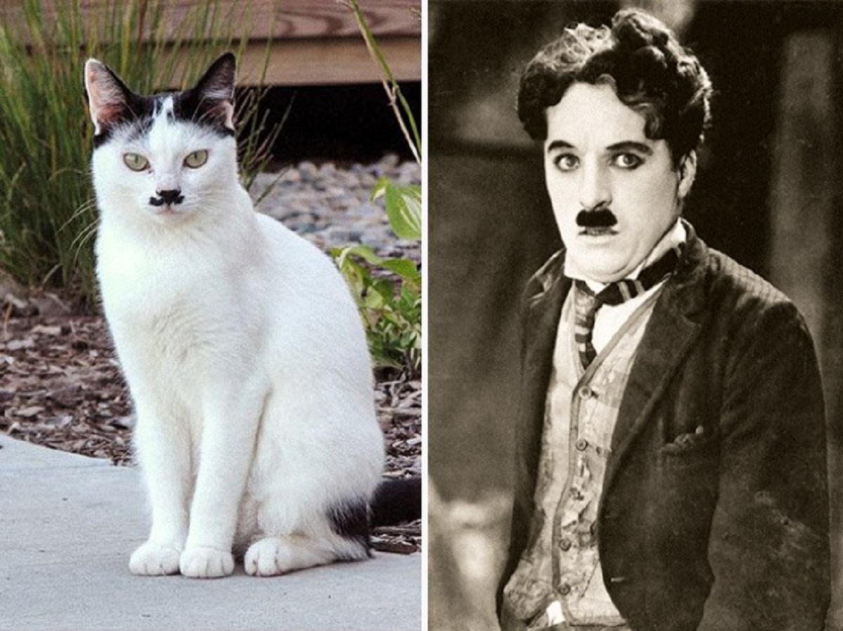 charlie chaplin gatto