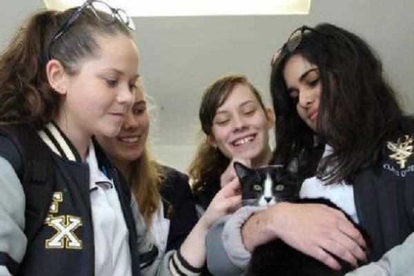 studenti e gatti in classe