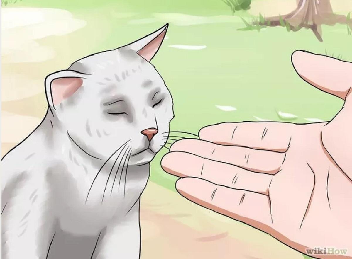 mano tesa davanti a gatto randagio