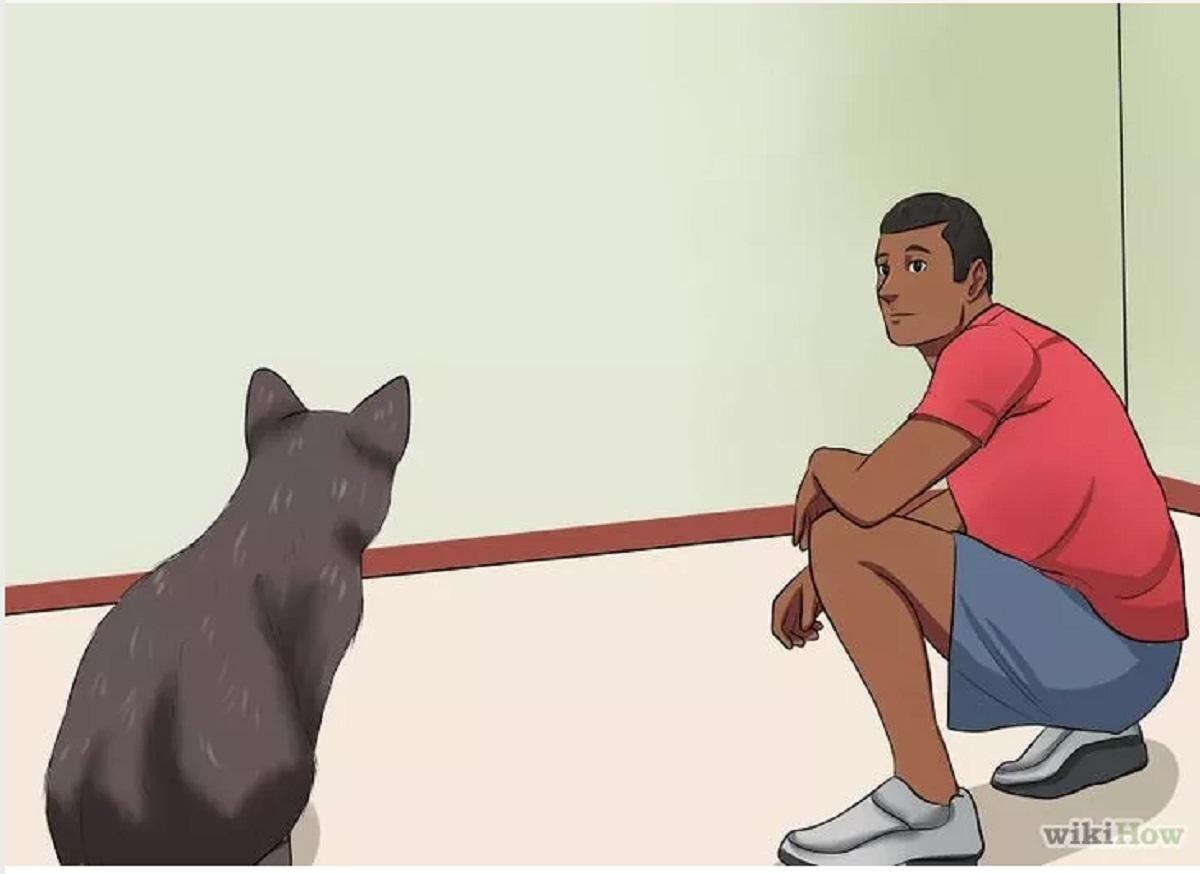 uomo accovacciato davanti a gatto randagio