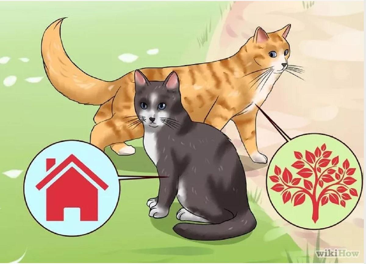 vignetta gatti randagi