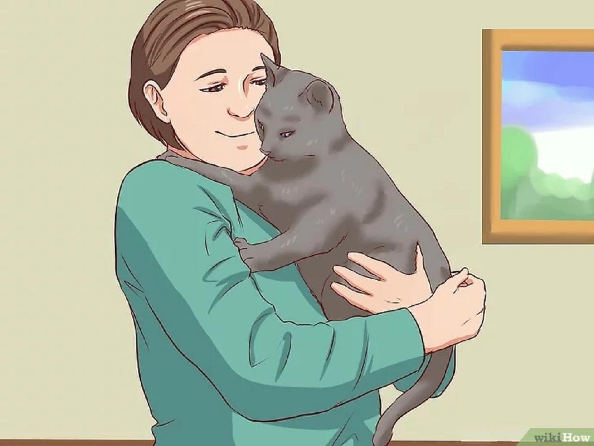 gatto preso in braccio vignetta