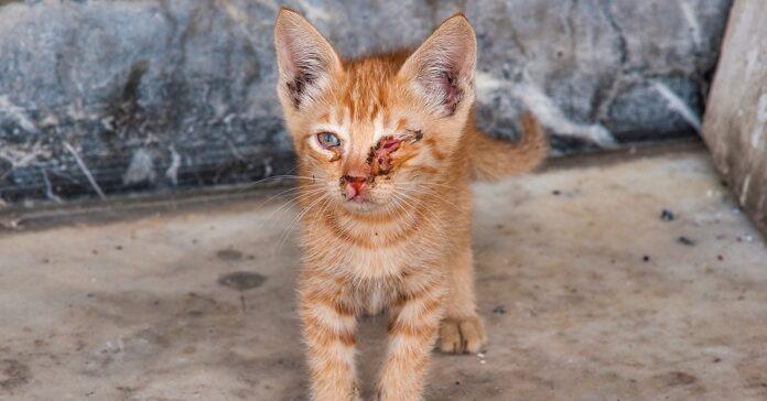 gatto rosso con occhi malati