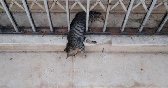 gattino ucciso a brindisi