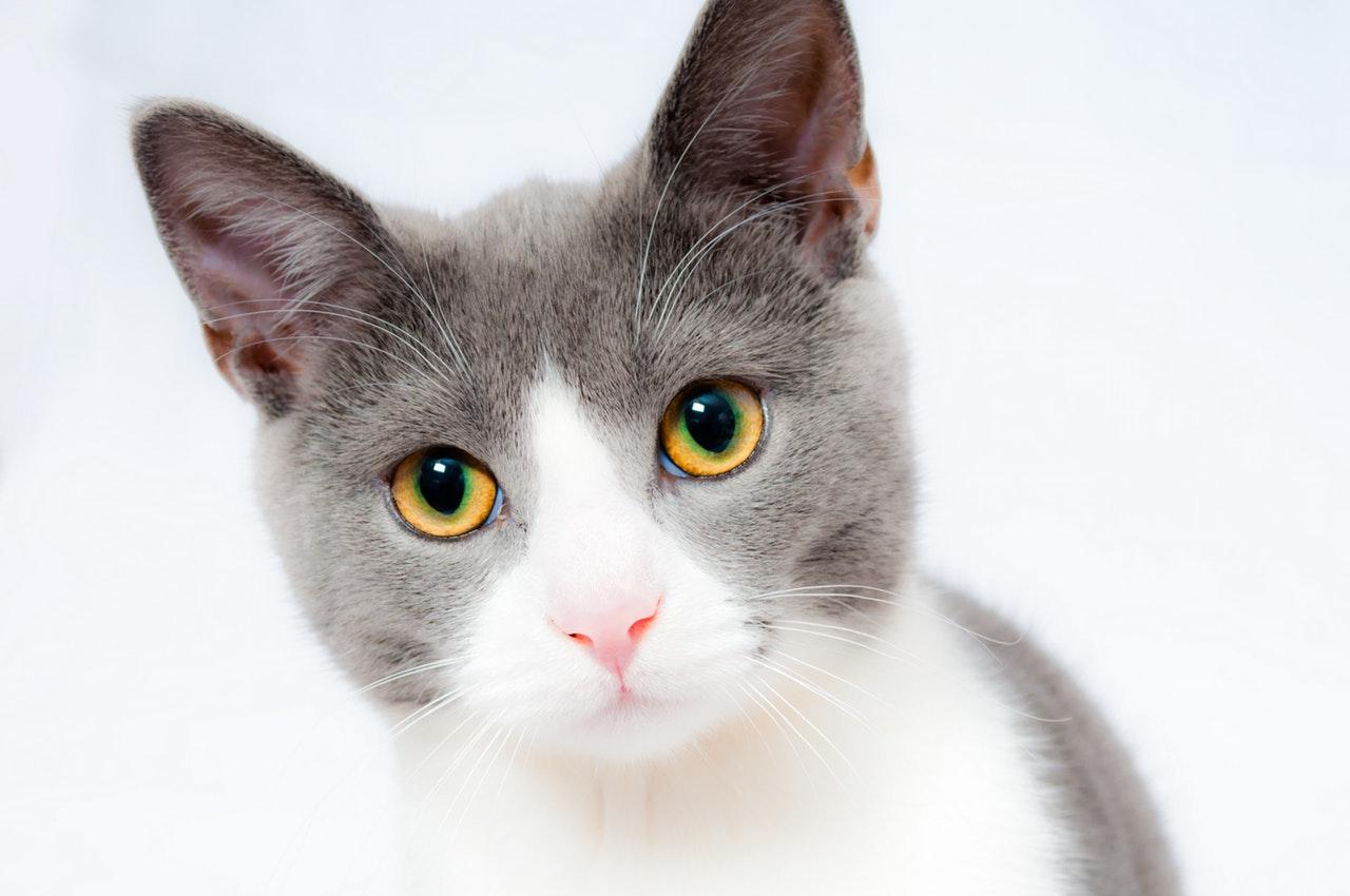gatto-alimentazione
