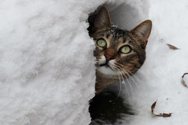 gatto e neve