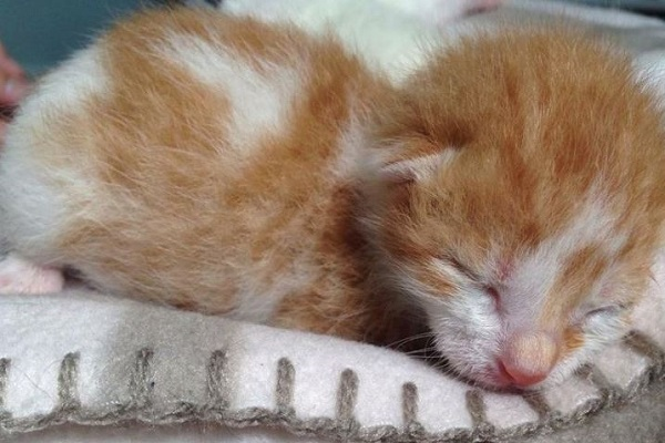 gatto appena nato